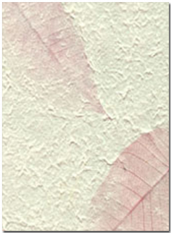 pink fossil leaf