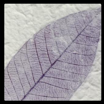 Purple Fossil Leaf